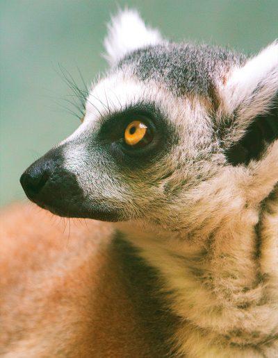 Zoo, München, Tierpark, Gehege