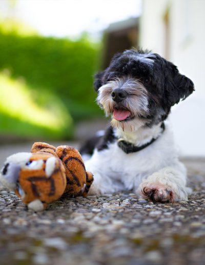 Hund, Stofftier, Garten, Sonne, Spielzeug, Hundehalsband
